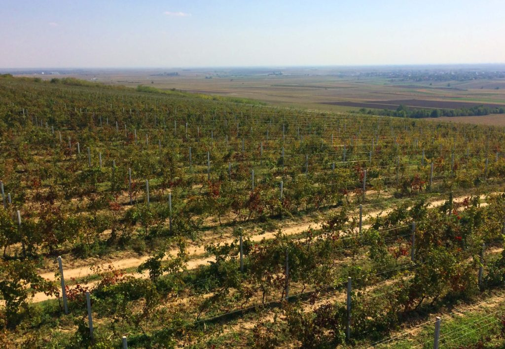 Vinogradi Krčedina