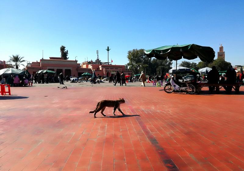 Trg Džema el-Fna, Marakeš