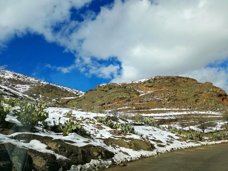 kaktusi pod snegom