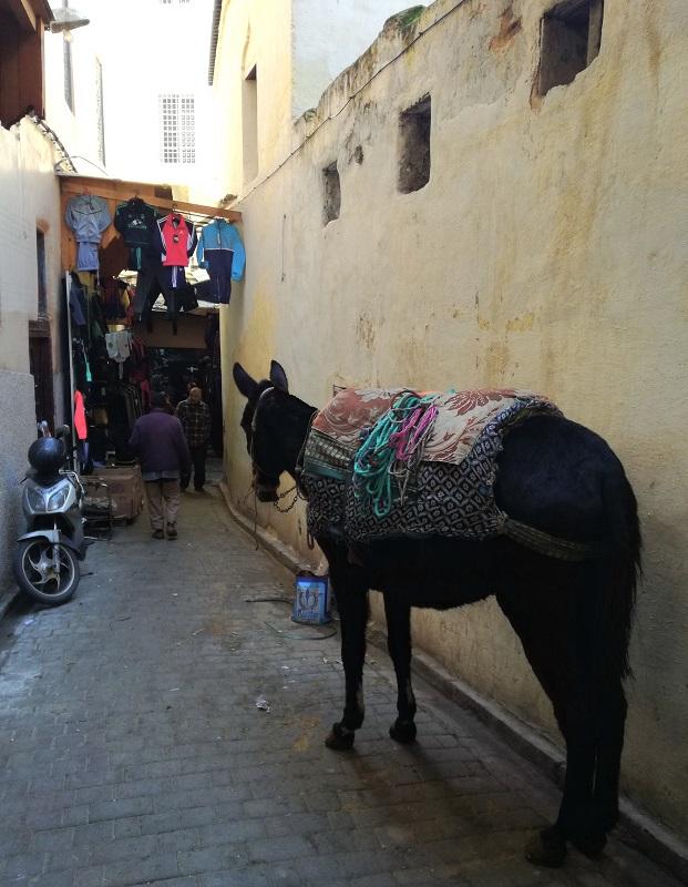 Fes, Maroko